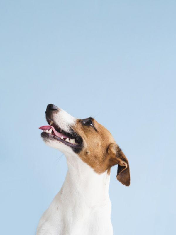 Larangan Memakan Daging Anjing di Shenzhen: Biar Jadi Manusia Beradab